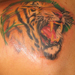 Tattoos - Tiger - 21725