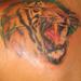 Tattoos - Tiger - 21725