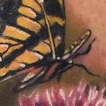 Tattoos - Realistic color butterflies with thistle flower. Ryan Mullins Art Junkies Tattoo - 102106