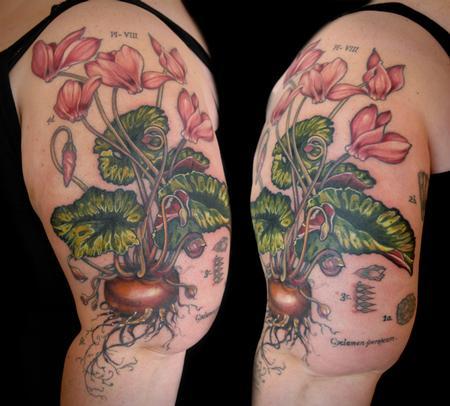 Aubrey Mennella - cyclamen flower tattoo vintage botanical