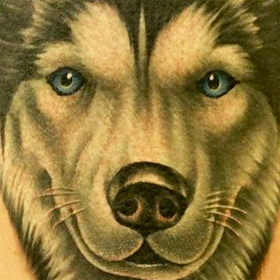 Tattoos - Color Husky Portrait - 103814