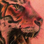 Tattoos - Roaring Tiger Tattoo - 70799