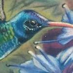 color realism hummingbird tattoo Tattoo Design Thumbnail