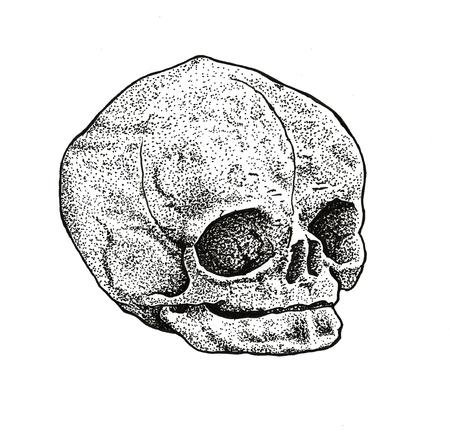 Ben Licata - Dotwork Fetal Skull