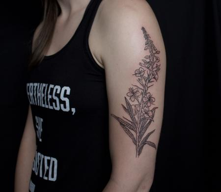 Ben Licata - Black fireweed botanical illustration tattoo on upper arm