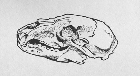 Tattoos - Bear Skull - 113988