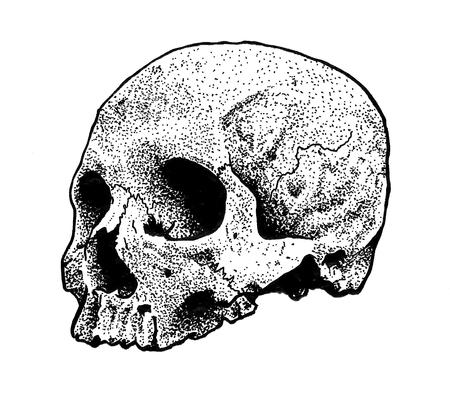 Tattoos - Dotwork Skull Drawing - 125314