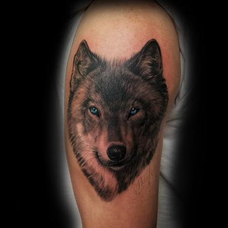 Haylo - Gray-shade Wolf with blue eyes