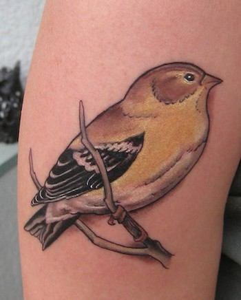 Shawn Hebrank - Little Goldfinch