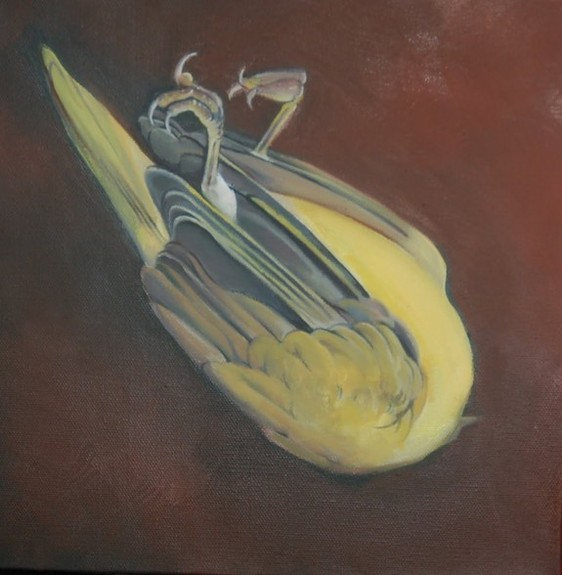 Shawn Hebrank - Dead Bird Painting