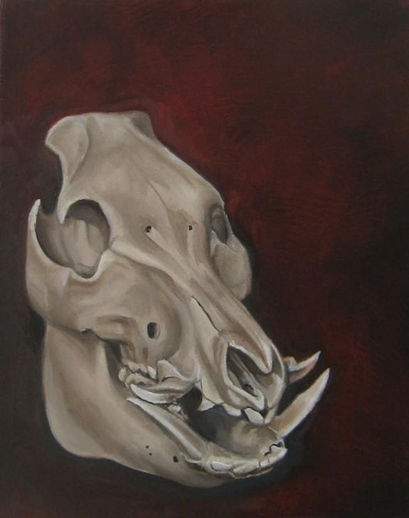 Warthog Skull by Shawn Hebrank : Original Art