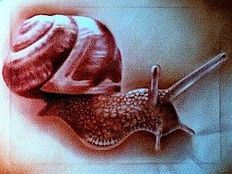 Tattoos - Snail - 77343