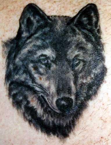 Wolf by jay crockett tattoonow for Jay crockett tattoo
