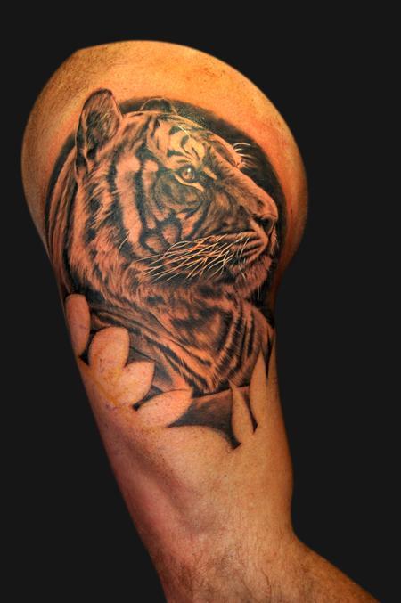 Jordan Campbell - Tiger portrait