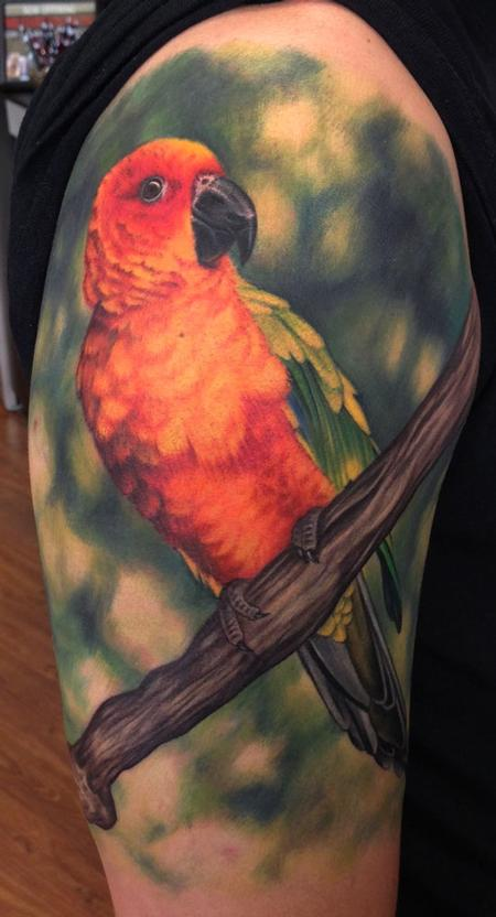 Tattoos - Sun Conure Tattoo - 93494