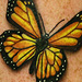 tattoo galleries/ - Monarch butterfly tattoo