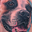 Tattoos - Boxer Dog Portrait Tattoo - 89581