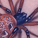 brown widow spider Tattoo Design Thumbnail