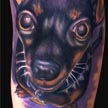 Tattoos - Min Pin Dog tattoo - 59706