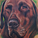 Tattoos - Chocolate Lab Portrait Tattoo - 84601