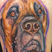 Tattoos - Mastiff portrait - 90048