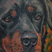 Tattoos - Rottweiler Tattoo - 70441