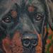 Tattoos - Rottweiler Tattoo - 70441