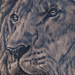 Tattoos - Realistic Lion Tattoo - 67321