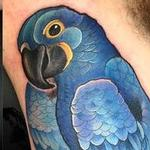 Tattoos - Blue maccaw  - 104127