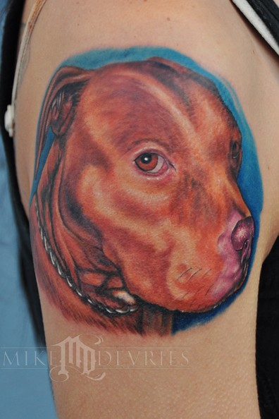 PitBull Tattoo by Mike DeVries : Tattoos