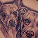 Tattoos - Chihuahua and Pitbull  - 75752