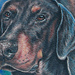 Tattoos - Doberman Tattoos - 50110