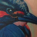 Kingfisher Tattoo
