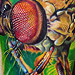 Tattoos - Robber Fly - 45639
