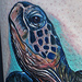 Tattoos - Sea Turtle - 50109
