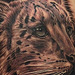 Tattoos - Snow Leopard Tattoo - 73300