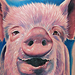 Tattoos - Pig Tattoo - 40994