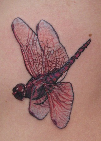 Tattoos - red dragonfly - 46423