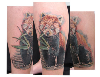 Tattoos - red panda - 31048