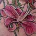 Tattoos - lily with herbs and flowers - 26266