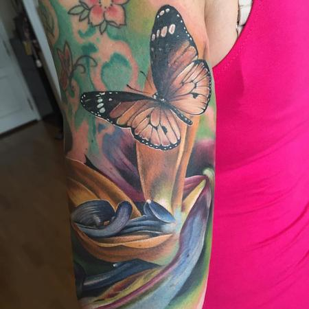 Birds of paradise and butterlfy / realistic color