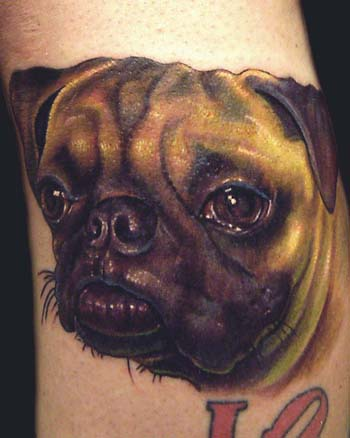Tattoos - color pug portrait - 32504