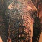 Tattoos - elefant - 119448