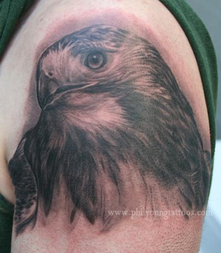 Phil Young - Hawk portrait!!