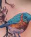 Tattoos -  - 44187