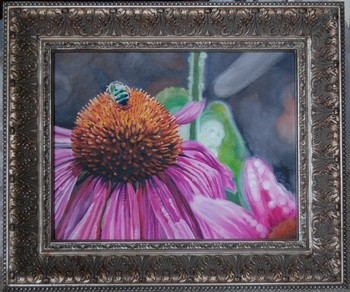 Looking for unique  Art Galleries? echinacea and green bee
