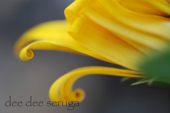 Looking for unique  photos? curly yellow flower 3