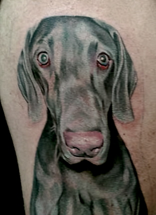 Tattoos - Illinois - portrait dog, animal portraits, realistic