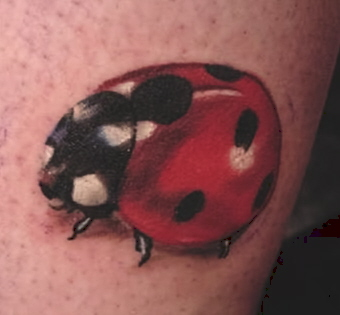 Tattoos - realistic bug , lady bug - 25726