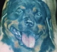Tattoos - dog portraits by dan plumley - 18255